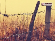 Barbed_Wire_05_SKYHALL_FENCE_SYSTEM