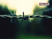 Barbed_Wire_06_SKYHALL_FENCE_SYSTEM